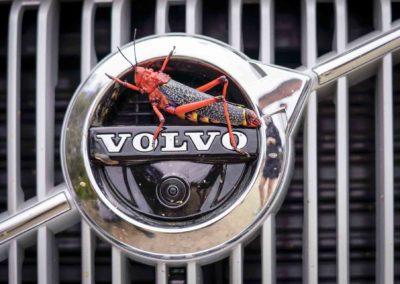 TransCape 2020 Volvo